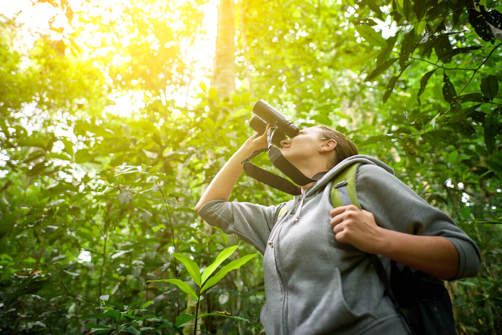 Best Binoculars For Birding 2019 The 8 Best Binoculars for Bird Watching (2019)   Bird Watching HQ