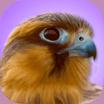 Best Bird Watching App - iBird Pro Review