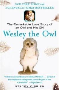 Best Birding Books to Read