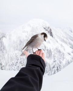 Adopt a Bird as a Birding Gift