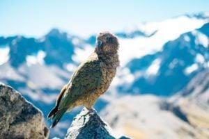 Bird Watching Tour During Holidays