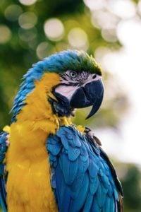 Photos of Birds, Photographs of Birds