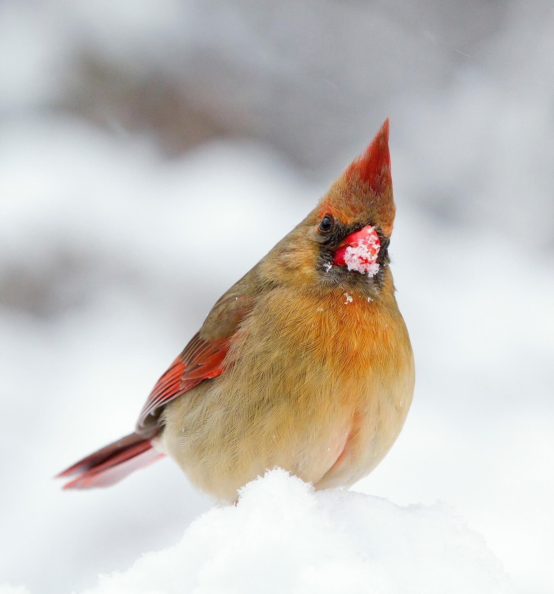 The 4 BEST Bird Feeders For Cardinals (That Actually Work