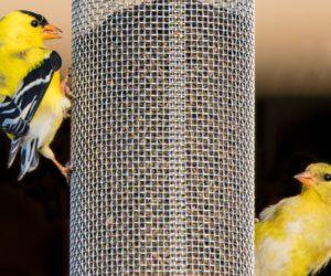 The 4 BEST Finch Feeders In MY Backyard! (2020)