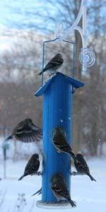best tube bird feeders