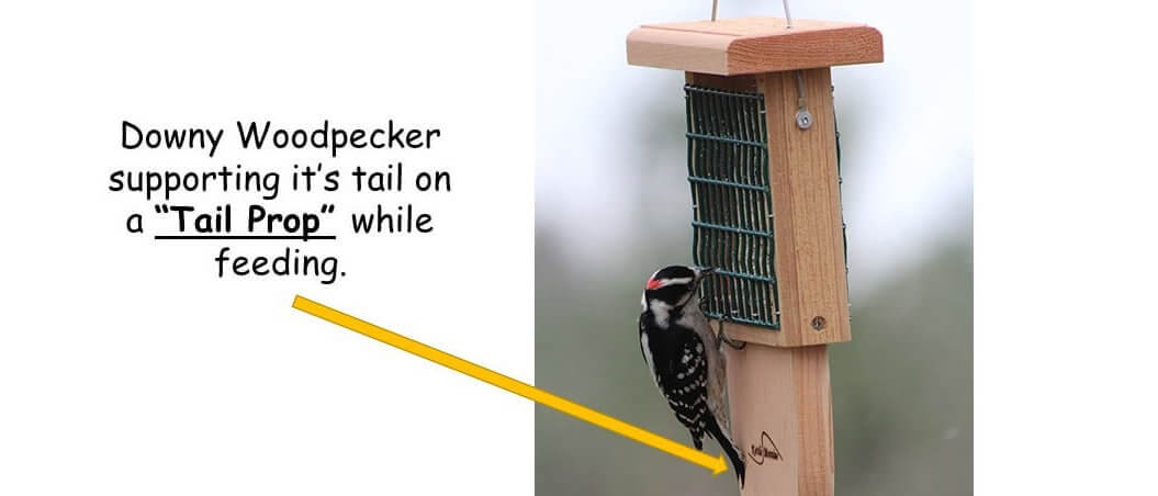 woodpecker suet feeders with tail prop