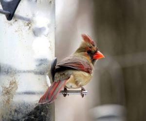 The 16 Best Bird Feeders In MY Backyard (2020)