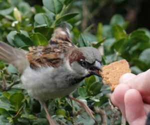 6 Proven Tips To STOP House Sparrows From Taking Over Your Feeders