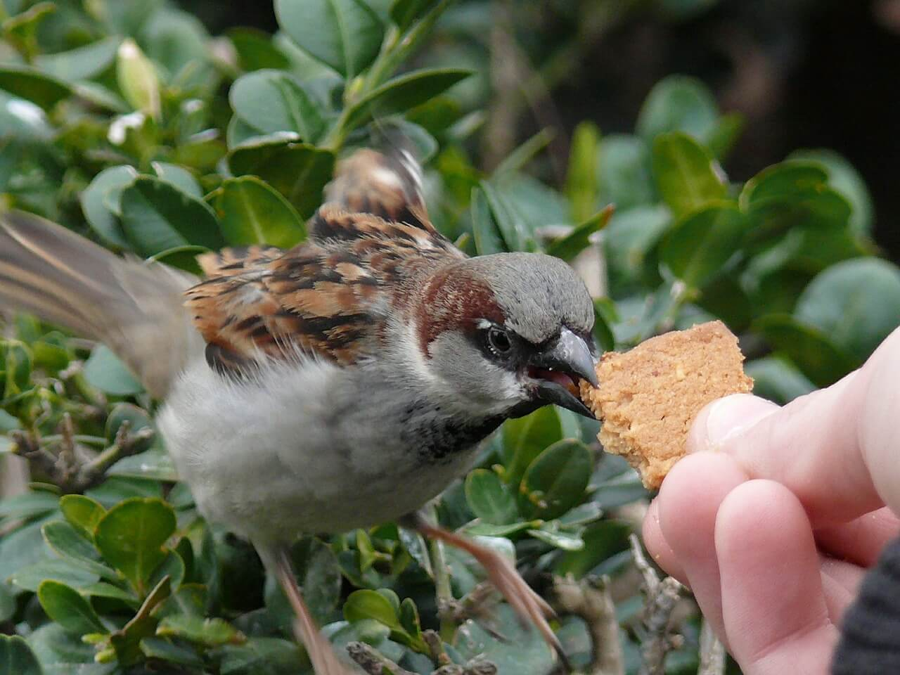 6 Proven Tips To STOP House Sparrows From Taking Over Your