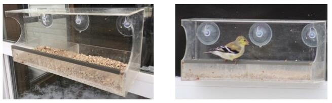 the best bird feeder for windows