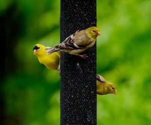 The 4 Window Bird Feeders Working BEST For Me! [2020]