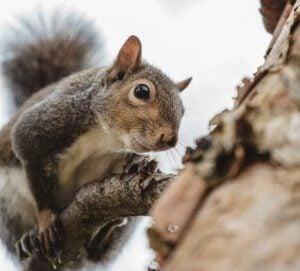 best feeders to feed squirrels