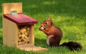 Best squirrel feeders