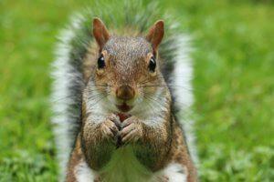 deter squirrels