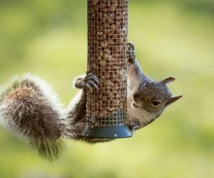 8 Effective Ways To Keep Squirrels Off Your Bird Feeders (2019)