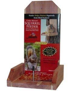 best squirrel feeder
