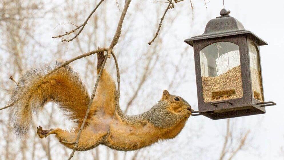 6 Squirrel Proof Bird Feeders [That ACTUALLY Work!] - Bird
