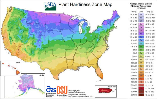 hardiness zone for hummingbird and butterfly flowers