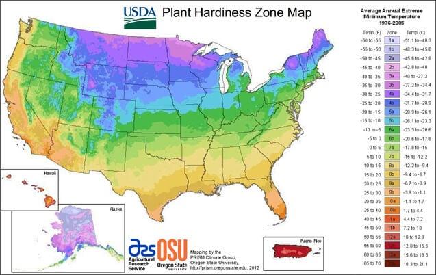 hardiness zone for hummingbird flowers