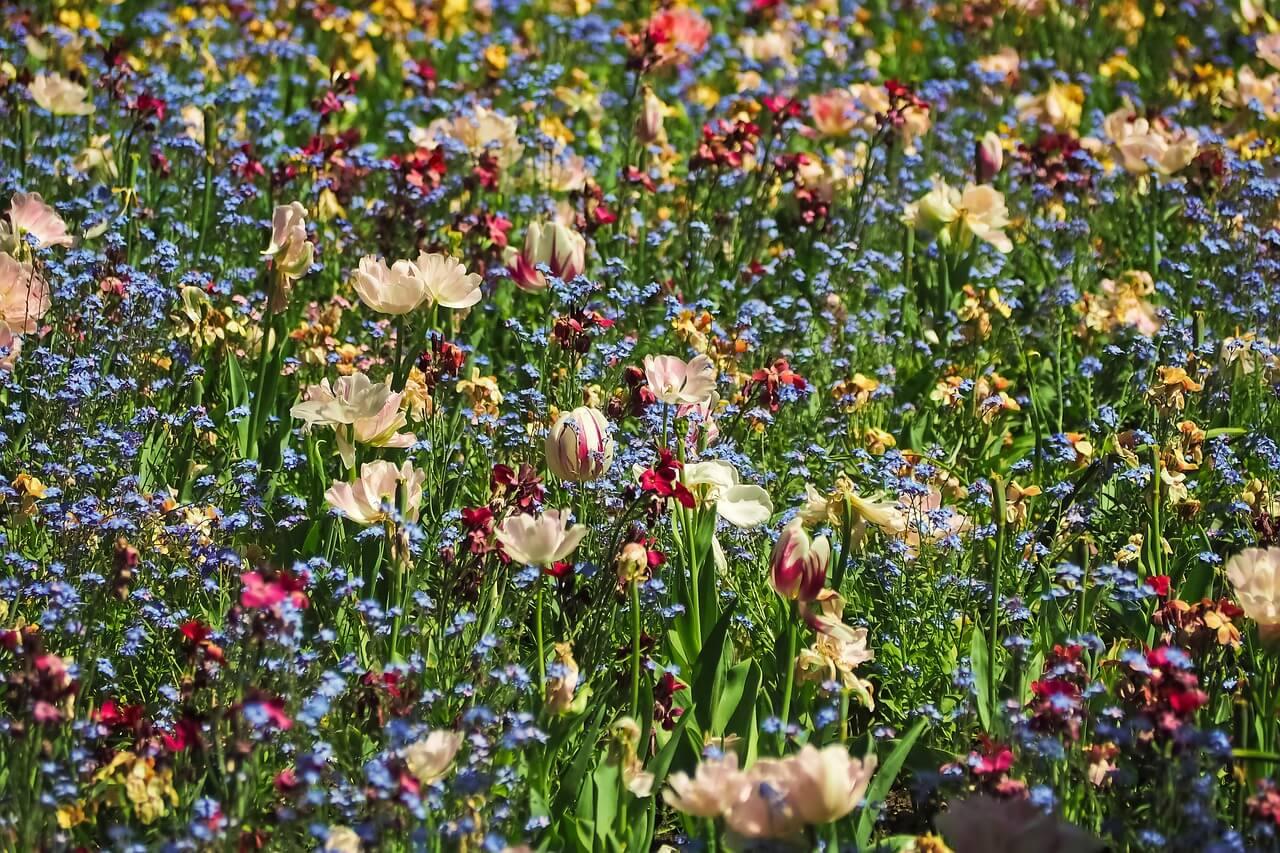 flowers that hummingbirds like