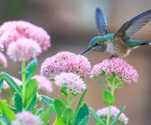 How To Attract Hummingbirds: 38 Simple Tips (2019 Guide!)