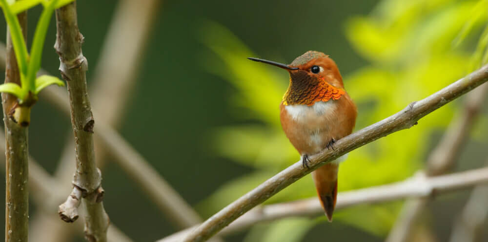 How To Attract Hummingbirds 38 Simple Tips 2019 Guide