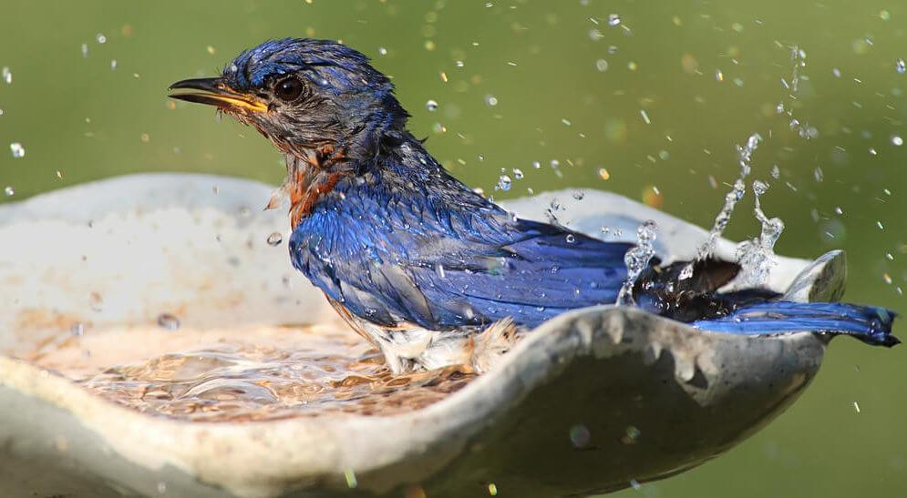 how to attract birds with birdbath