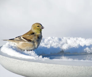 The 6 BEST Heated Bird Baths To Try This Winter (2019)