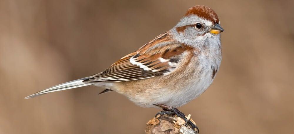 common winter birds in winter
