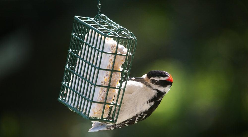 types of bird feeders - suet