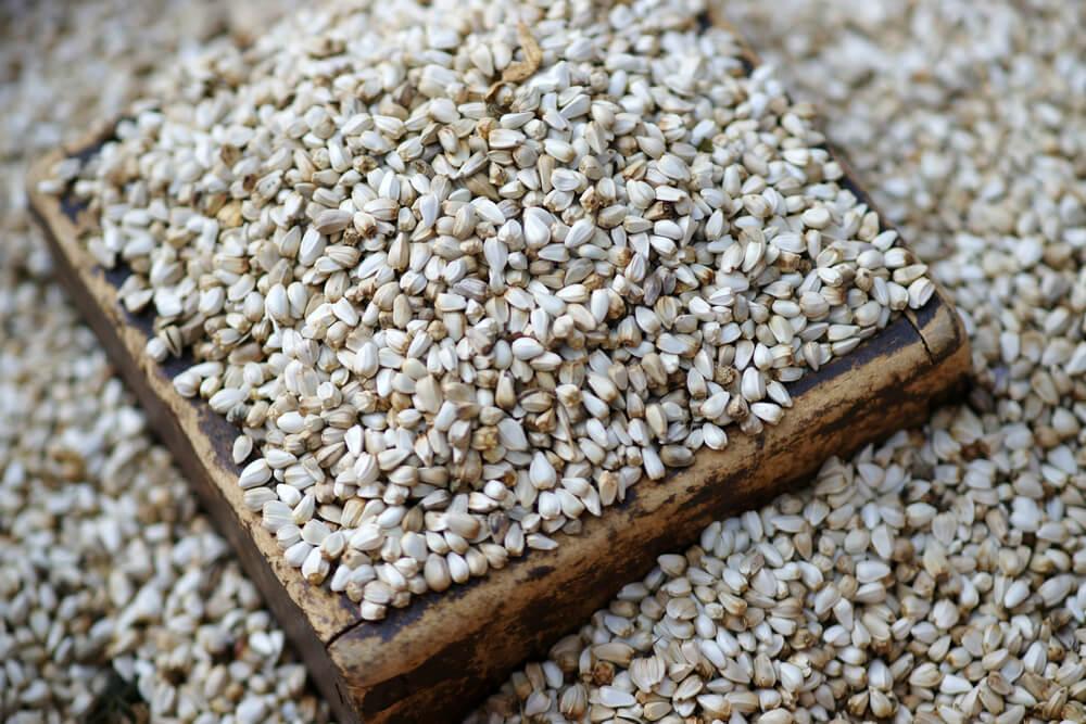 safflower seeds for birds