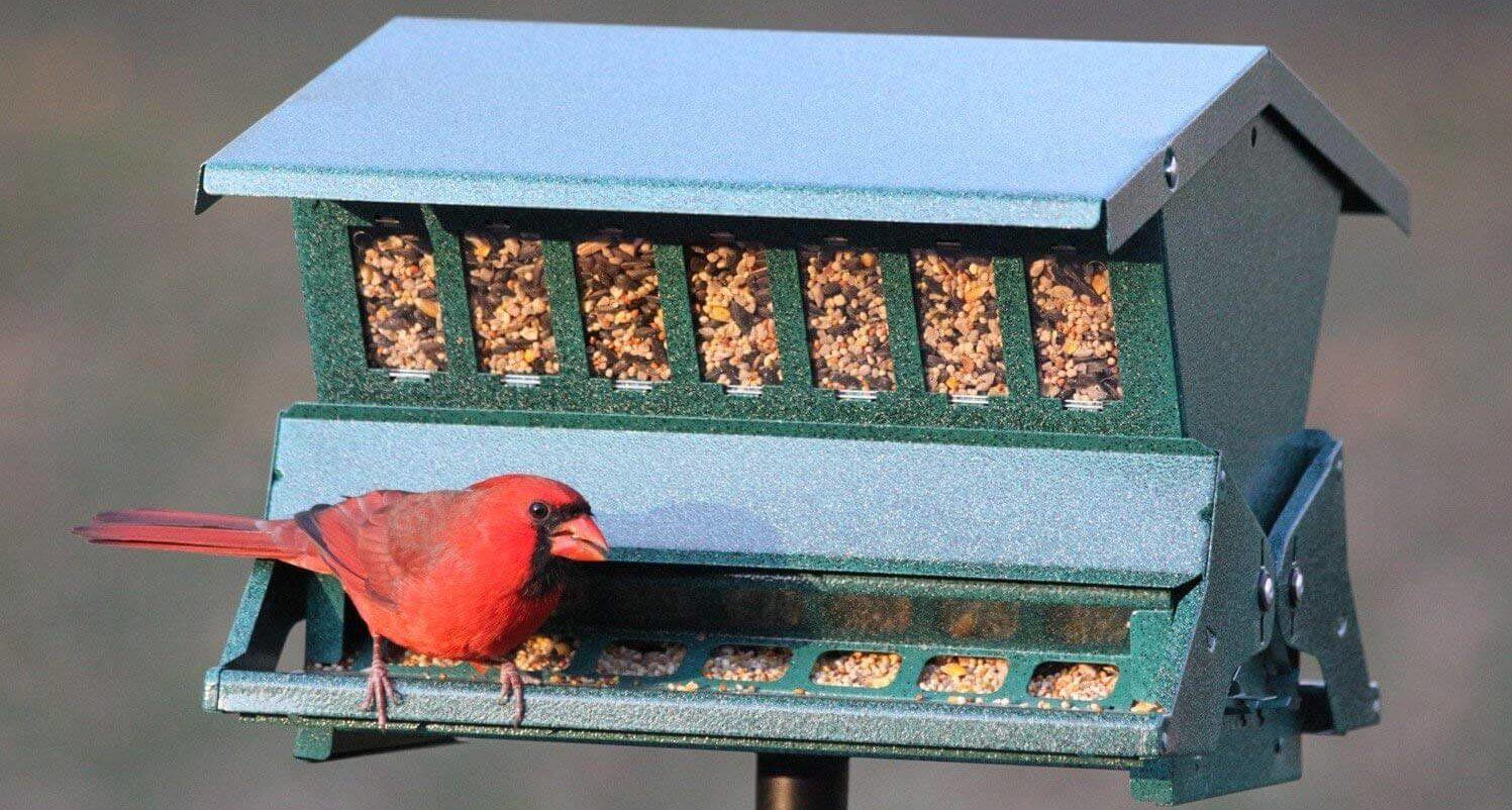 hopper feeder for small birds
