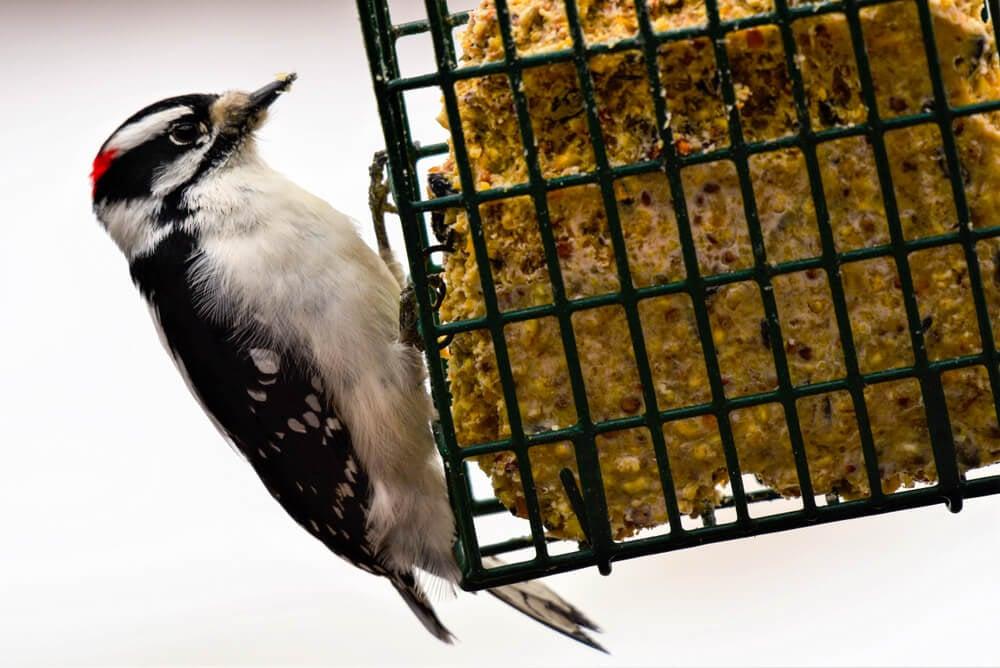 hanging suet feeders