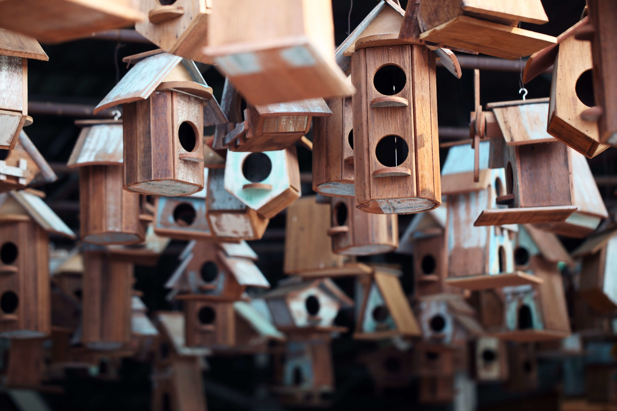 13 FREE Birdhouse Plans (Easy PDF/Video Instructions
