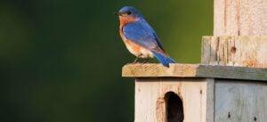 free nest box plans