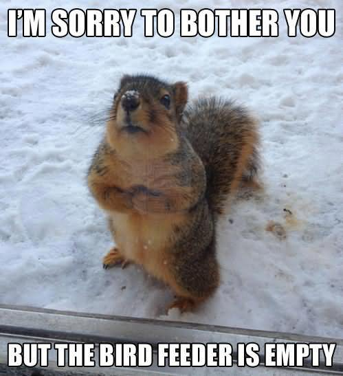 funny squirrel meme