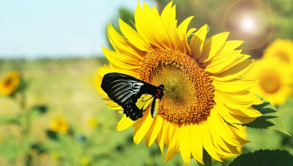 best plants for butterflies