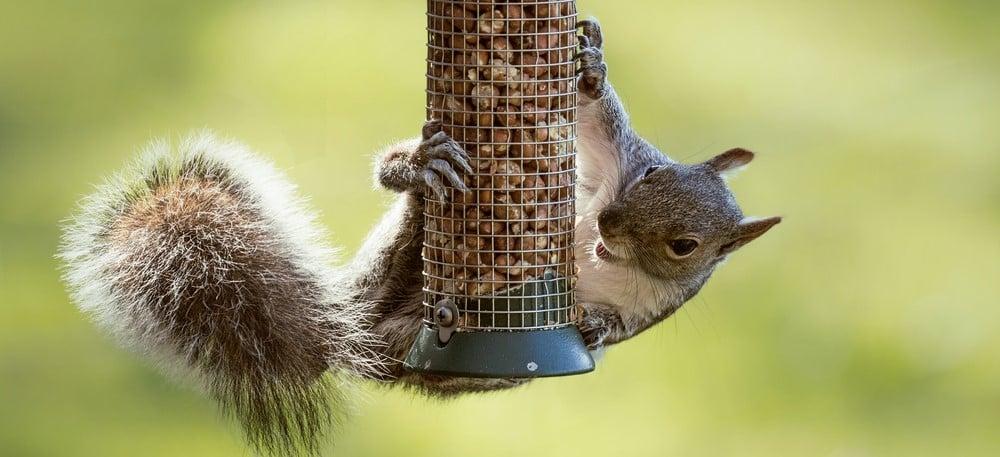 feeding birds not squirrels