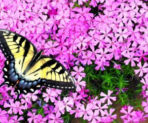20 PROVEN Plants That Attract Butterflies [2020 Guide]