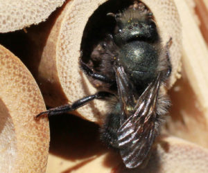 Bee Houses 101: Where to buy and how to use them! [2019]