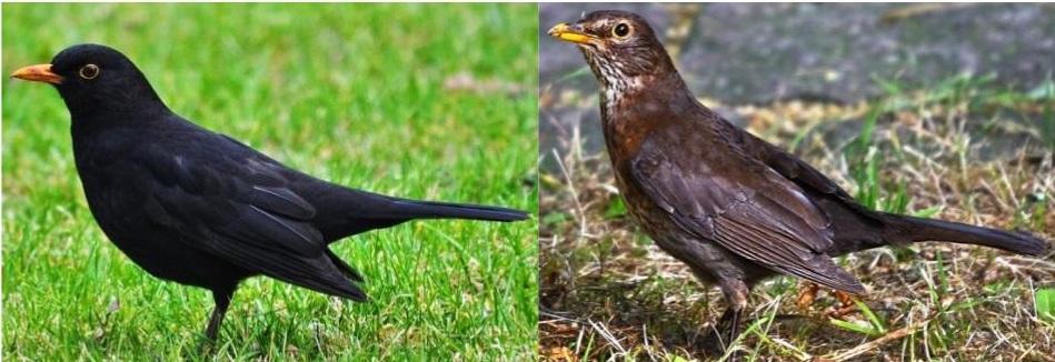 common birds ID guide
