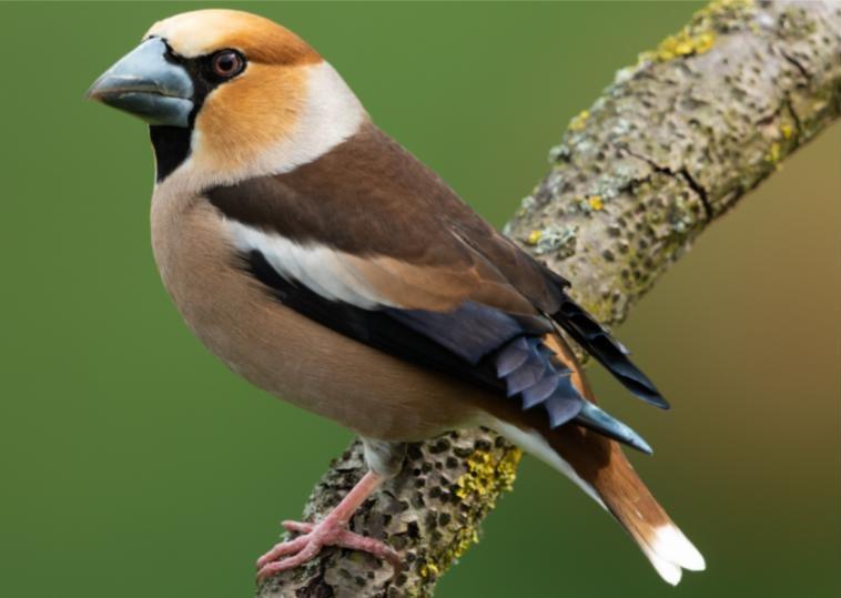 amazing birds from europe