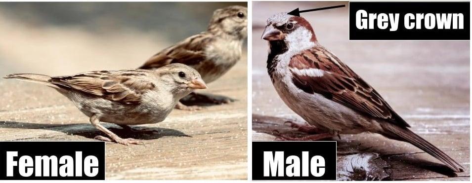 common european birds