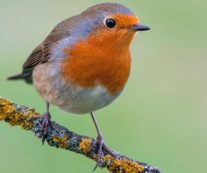 21 Most Common Feeder Birds in Europe (ID Guide!)
