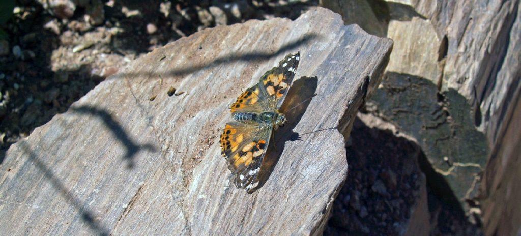 attracting butterflies with stones in your garden