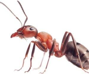 9 Ways To Keep Ants OFF Your Hummingbird Feeders