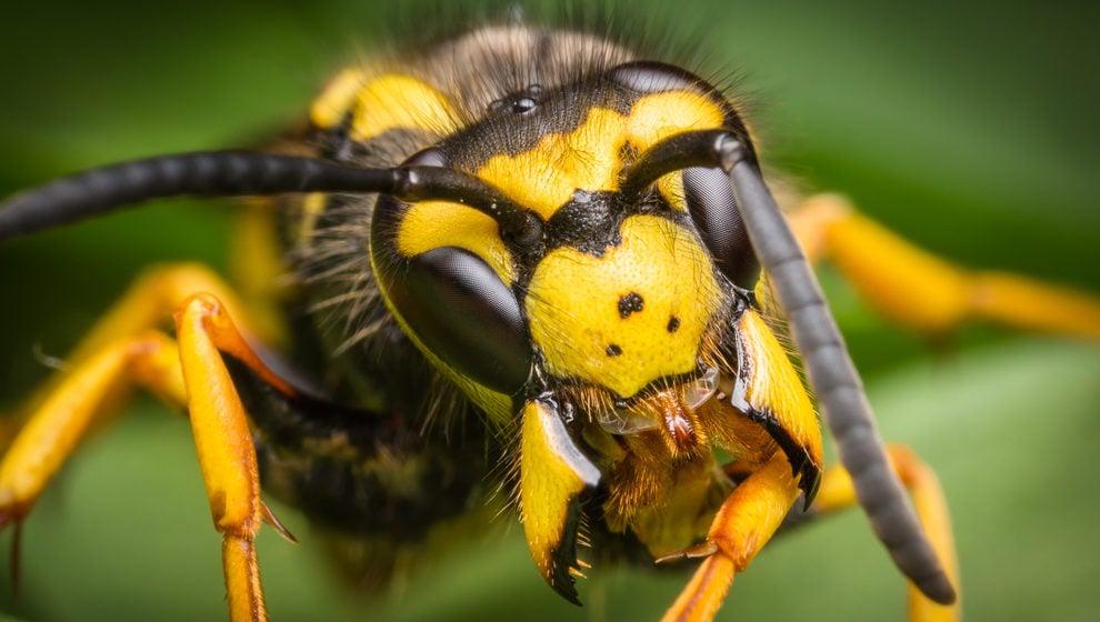 bees off away from hummingbird feeders