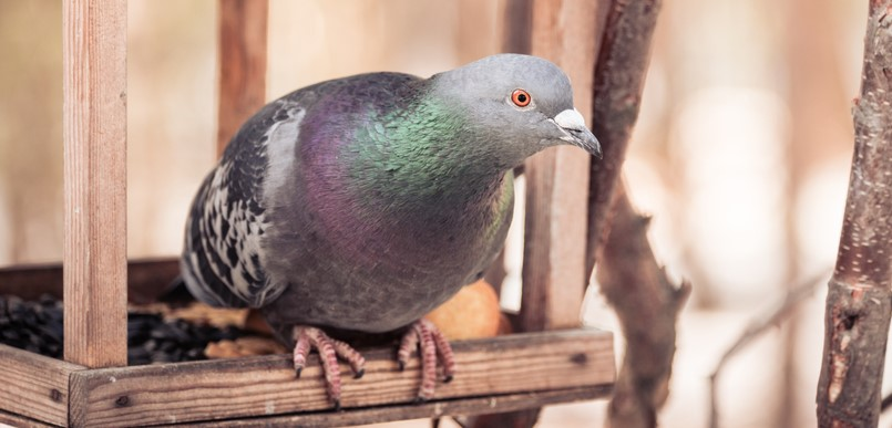 how to keep pigeons off bird feeders