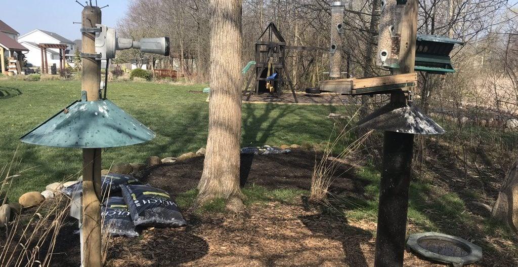 keeping raccoons away from bird feeders