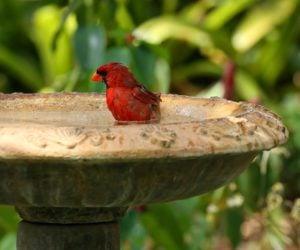 12 BEST Bird Baths To Consider In 2020! (I own #5)